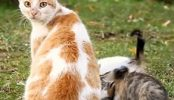 Super hero cats protecting and defending compilation